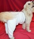 Mozzie in Medium Original Pants