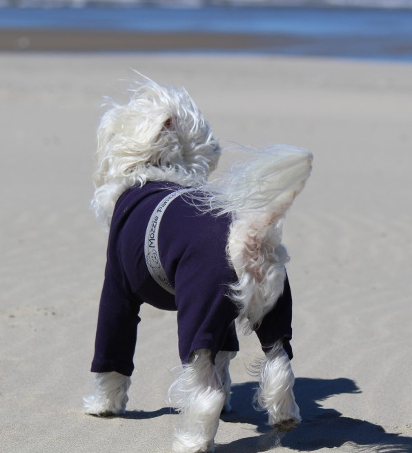 Mozzie Pants, Pants For Dogs And