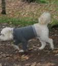 Mozzie in medium fleece top