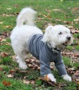 Cody in medium fleece top