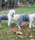 Cody and Mozzie in Fleece Pants