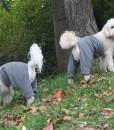 Cody and Mozzie in Fleece Pants