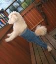 Mozzie in Original Pant Medium