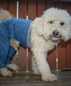 Pants for dogs