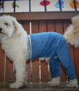 Mozzie in Walking Pant Medium