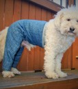 Mozzie in Walking Pant, Medium