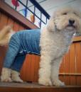 Mozzie in Original Pant, medium
