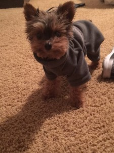Finnley in XS Fleece