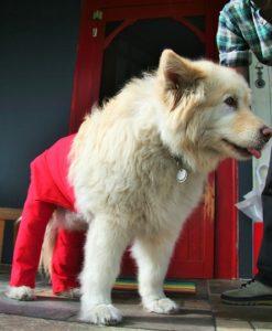 Chester XL Walking Pants
