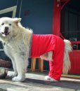 Chester XL Walking Pants