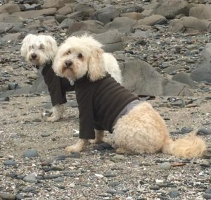 Cody and Mozzie staying warm and clean at the beach!